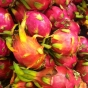 harbin-dragon-fruit