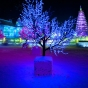 harbin-ice-city-china-tree-glow-by-nick-saglimbeni