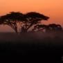 Slickforce-Kenya-amboseli-dusk-sunset-dawn-sky-colors-acacia-trees-nick-saglimbeni-7632