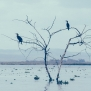 Slickforce-Kenya-crescent-island-dead-tree-vultures-birds-waiting-perched-nick-saglimbeni-1170