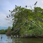 venezuela-bird-sanctuary